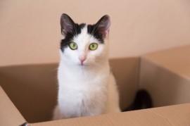Cat-In-Box-iStock_000040131760_Large
