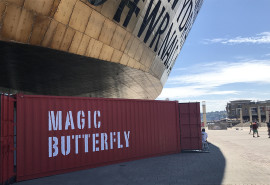 magicbutterfly